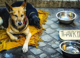 ANZA Action Animal Charities in Singapore