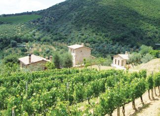 Sour Grapes drives around Tuscany for Brunello