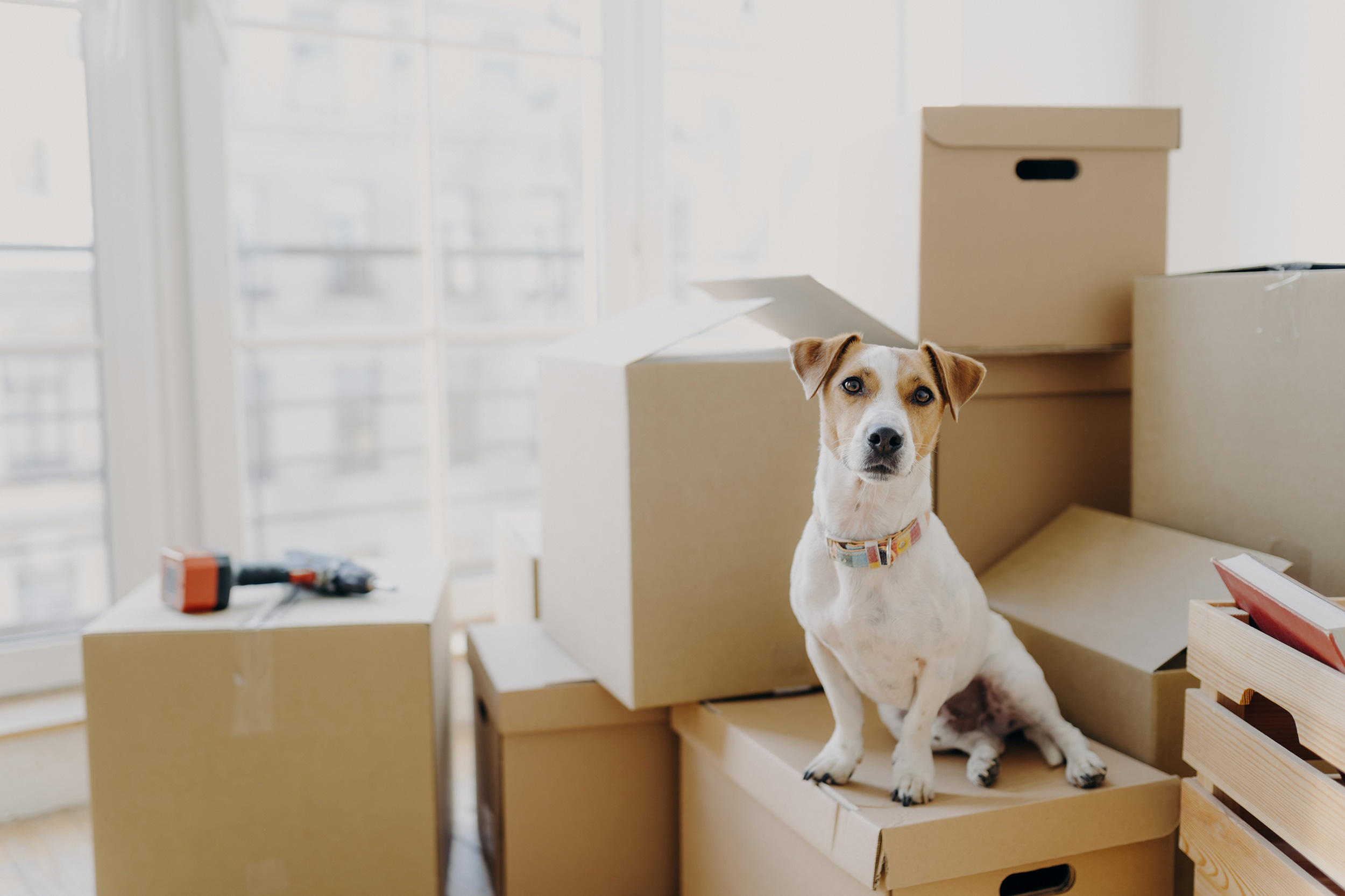 Get Your Pet to Be More Familiar With Packing Supplies and Boxes