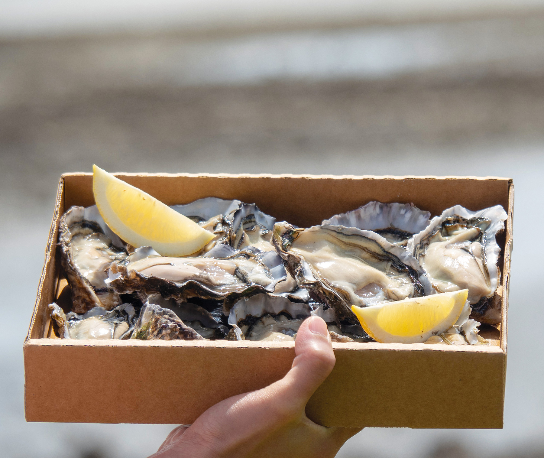 The Bluff oyster